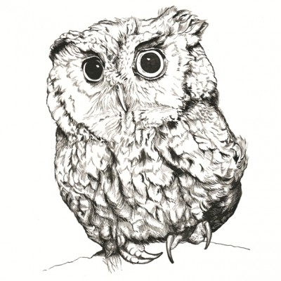 A4 Baby Owl