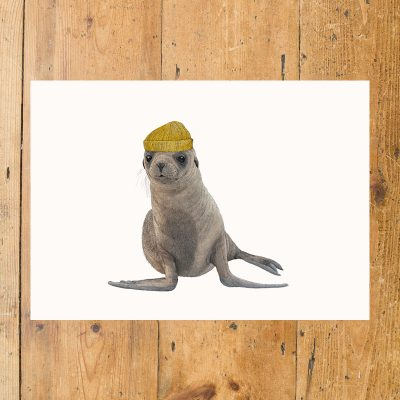 Cape Fur Seal with Hat
