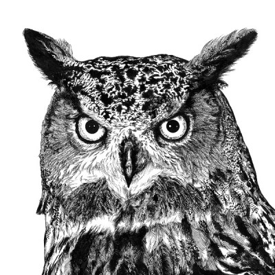 Eagle Owl Archival Print 600 WEB