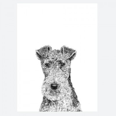Fergus the Fox Terrier
