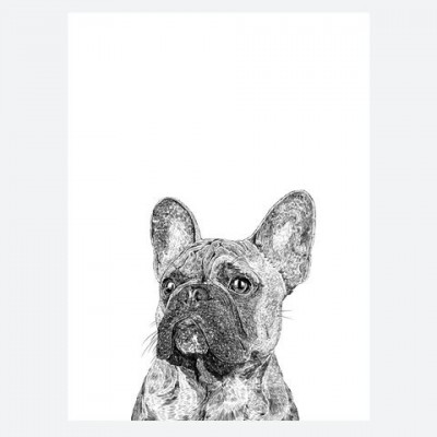 Frank the French Bulldog