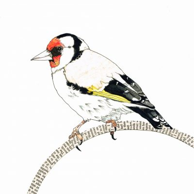 LB-sitting goldfinch