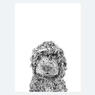 rusty-the-labradoodle