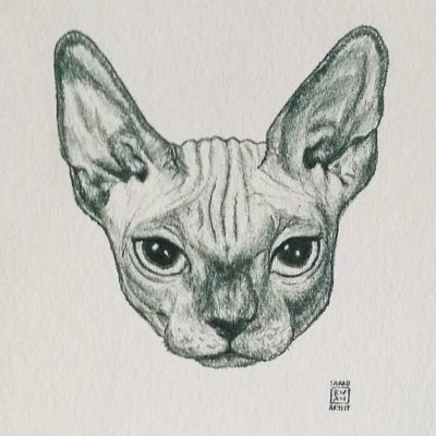 Sphynx Cat Animal Head Portrait by sarah kwan artist