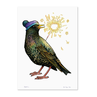 Starling with Sparkler