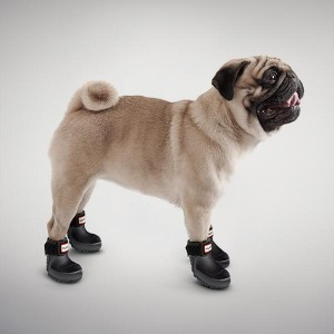 hunter wellies for dogs