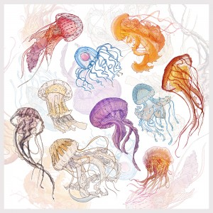 jelly fish, under the sea, hari draws, hari conner