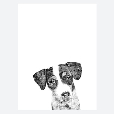 m_jack Russell1