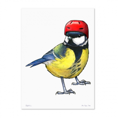 Great Tit in a Cycling Helmet