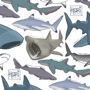 sharks, under the sea, great white, basking, hari draws, hari conner