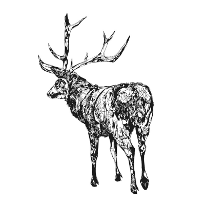 standing-stag