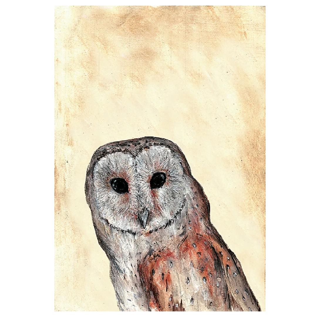 Barn Owl A4 Print - Sale Products, Animal Kingdom, Framed ...