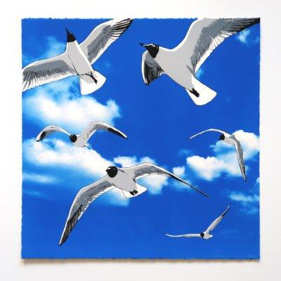Colony of Black Headed Gulls by Fiona Hamilton