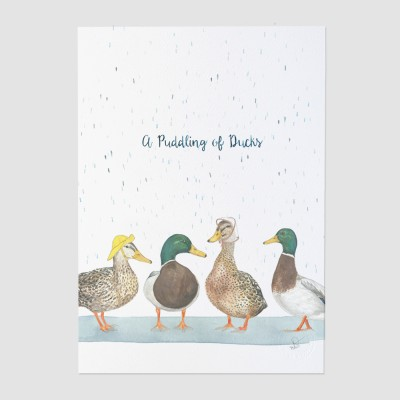 A Puddling of Ducks