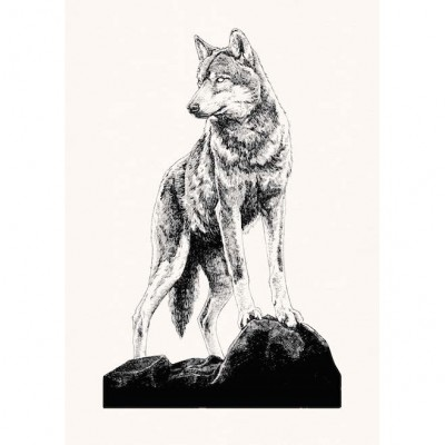 Canis Lupus by Peter Carrington