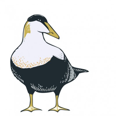 Eider Duck Card by Emily Hogarth