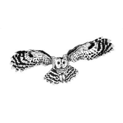 Flying Tawny Owl Archival Print WEB sq 600