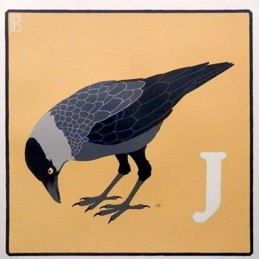 Jack Daw by Patrizio Belcampo