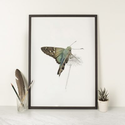 Long-Tailed-Skipper-framed