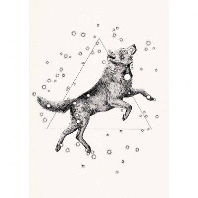 Searching The Stars - Dog print by Peter Carrington