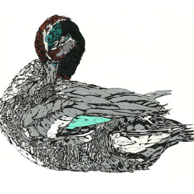 Duck, screen print, susie wright, limited edition