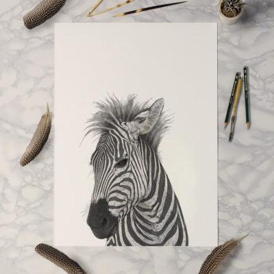 Zebra-A1-1