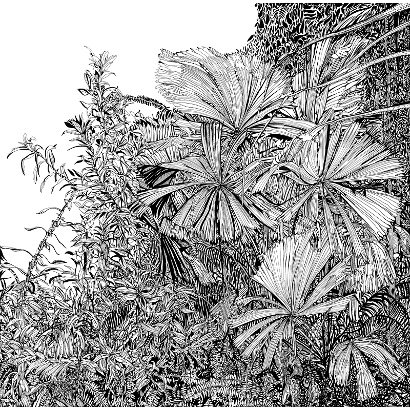 botanical plants by susie wright