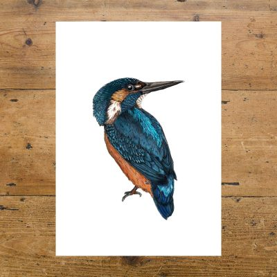 Kingfisher Bird, By The Water, Birds, Illustration, Ben Rothery