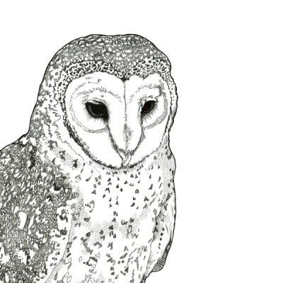 masked owl x1WEB sq 600