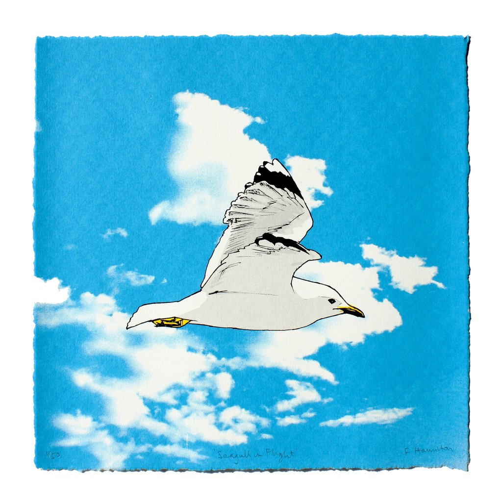 Seagull in Flight by Fiona Hamilton